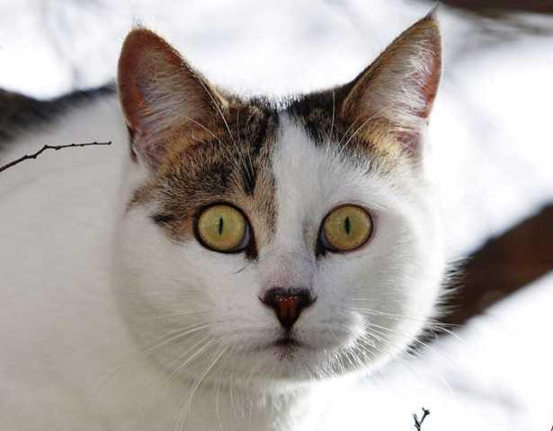 Perché I Gatti Hanno Paura Dei Cetrioli Idee Green