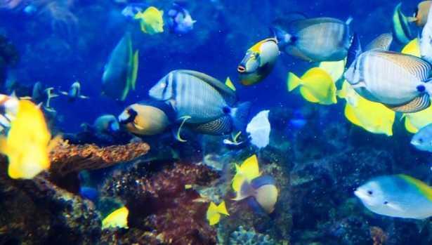 Pesci tropicali per acquario idee green for Acquario per pesci