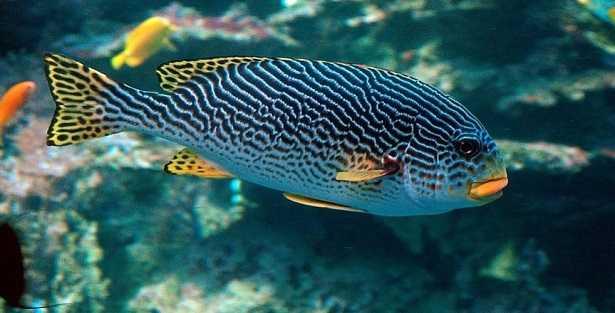 Vendita piante per acquario for Vendita on line pesci tropicali