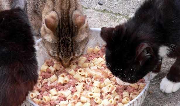 Fabbisogno nutrizionale gatto