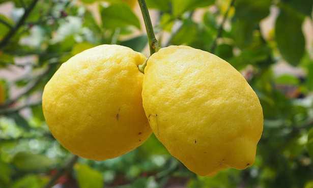 Olio essenziale di limone per uso interno