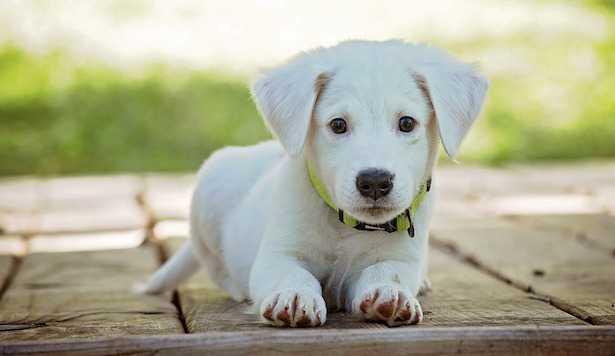 come proteggere cane gatto da zanzare
