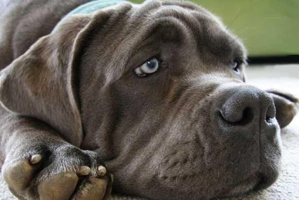 odore pipì cane
