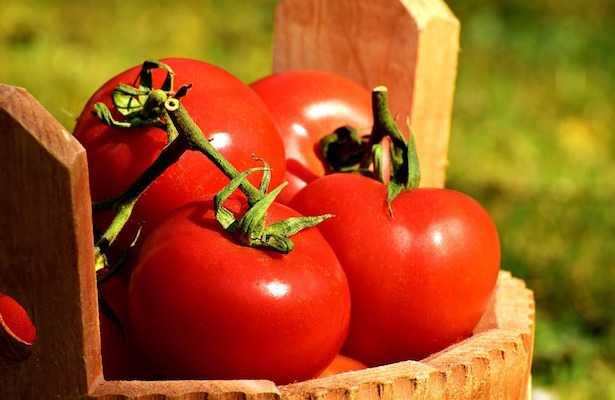 Concime per pomodori tutti i consigli idee green for Concime per pomodori