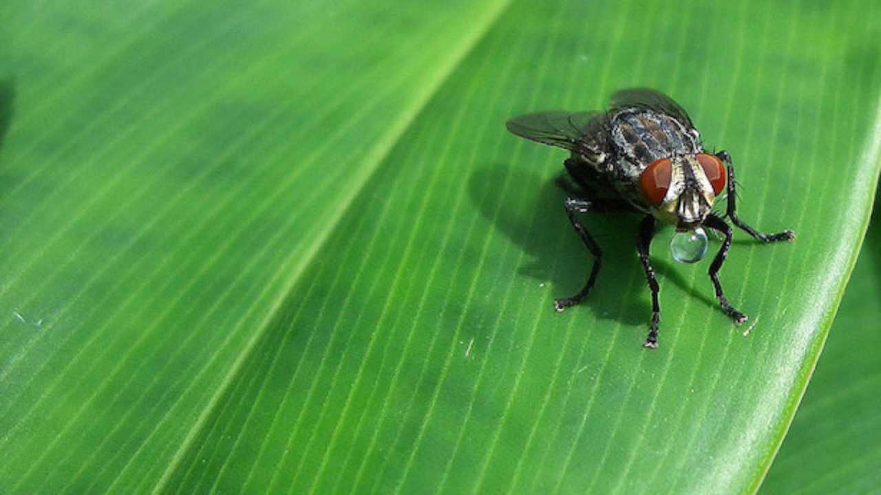 Troppe Mosche In Giardino repellente mosche, i rimedi più efficaci - idee green