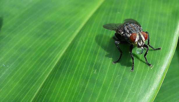eliminare mosche giardino