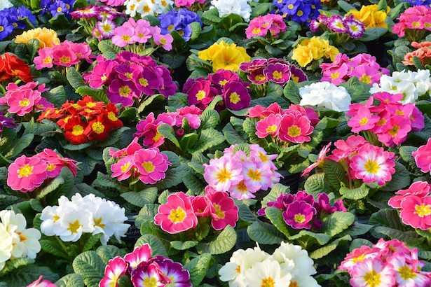 fiori all ombra piante senza sole