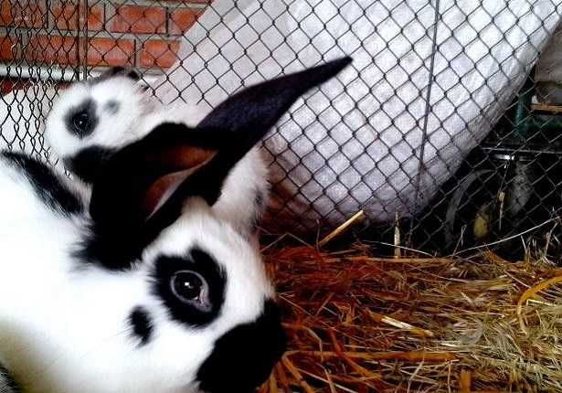Gabbia per conigli