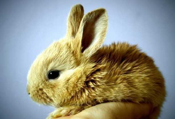 Gabbia per conigli fai da te idee green for Casette per conigli fai da te