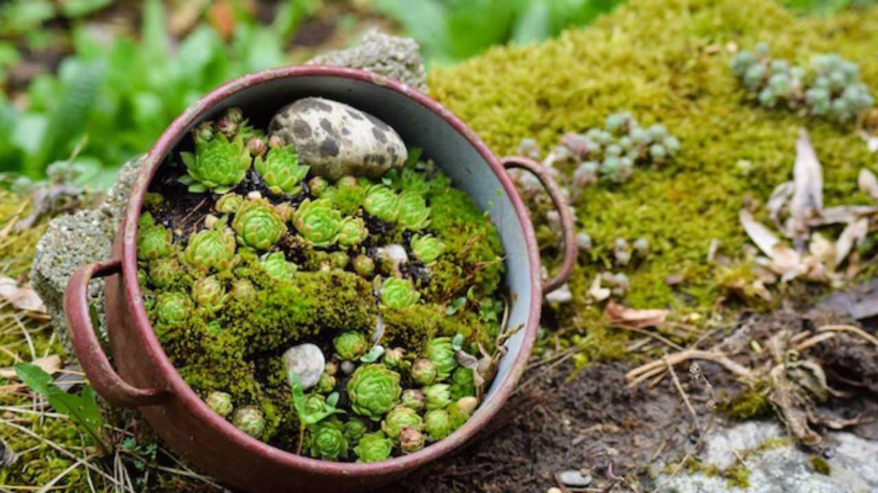 Piante Grasse Piccole Prezzi moltiplicazione piante grasse - idee green