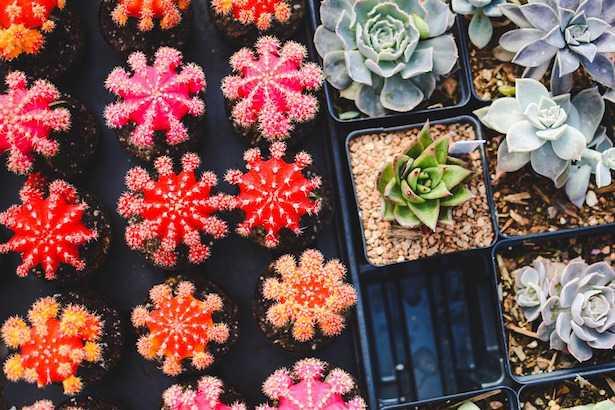 piante grasse in estate cure