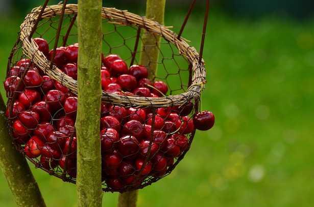 risotto ciliegie
