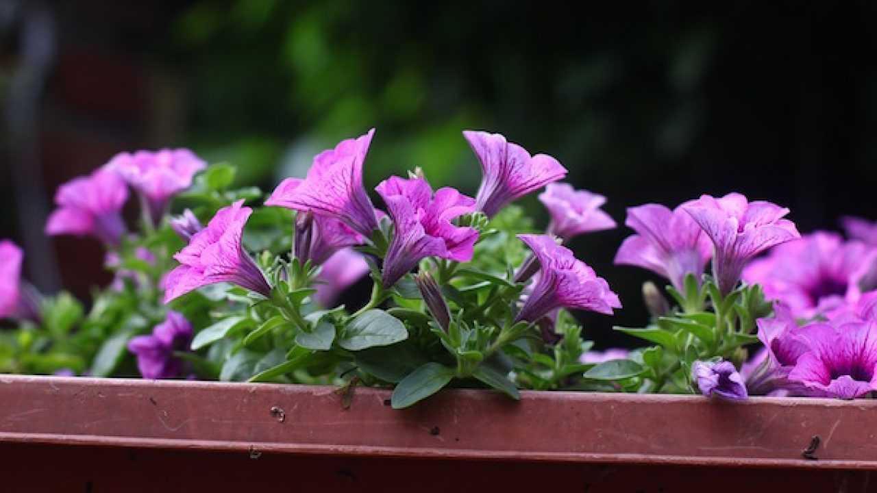 Terriccio Non Assorbe Acqua come irrigare piante in vaso - idee green