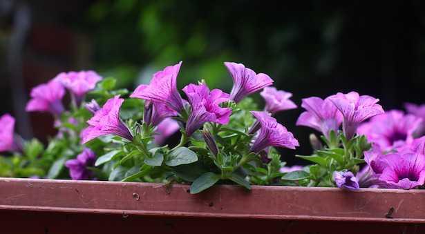 Come irrigare piante in vaso