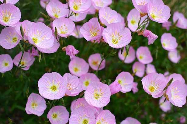 Fiori perenni idee green for Giardino fiori
