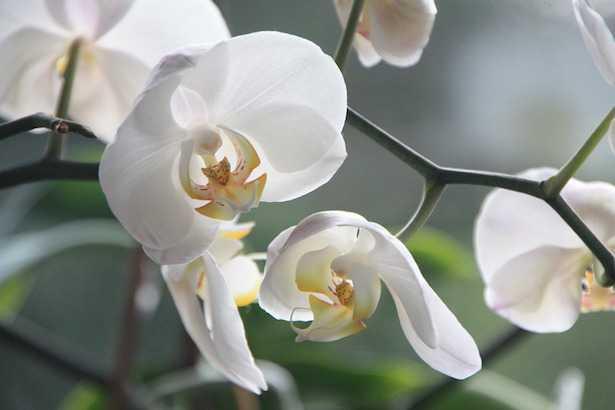 orchidea in estate