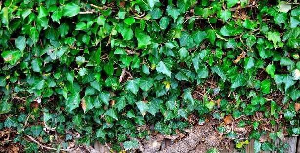 Piante Aromatiche Perenni Elenco : Piante perenni elenco e specie rappresentative idee green