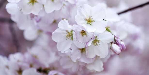 Profumo dei fiori