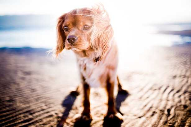 proteggere cane dal sole