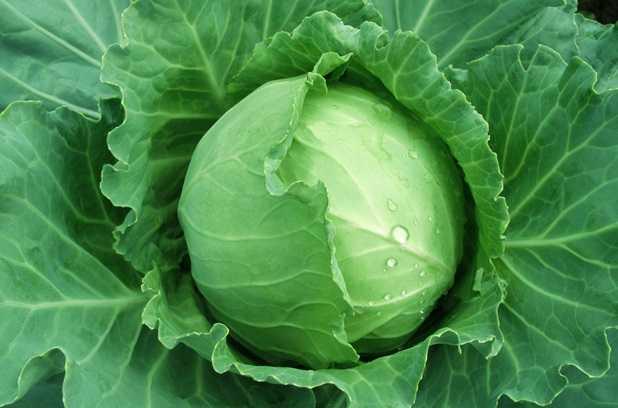 Verdure a foglia verde propriet benefiche idee green for Quali verdure possono mangiare i cani
