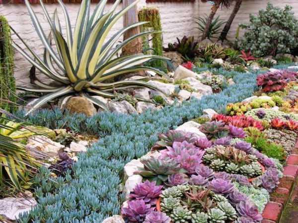 idee giardino piante grasse