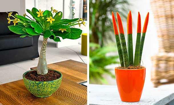 pianta da appartamento bella