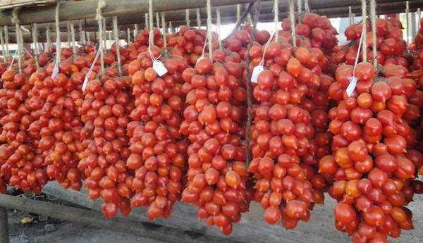 pomodoro piennolo vesuvio coltivazione