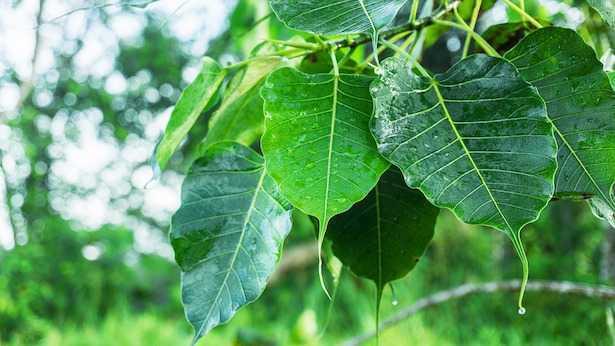 Come pulire le foglie