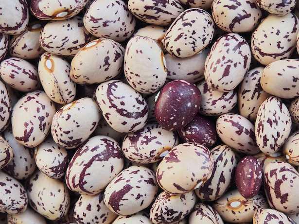tipi di fagioli coltivati in italia e nel mondo