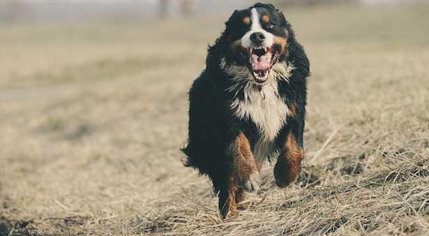 Come correre con il cane