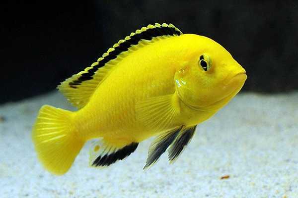 pesci acquario dolce