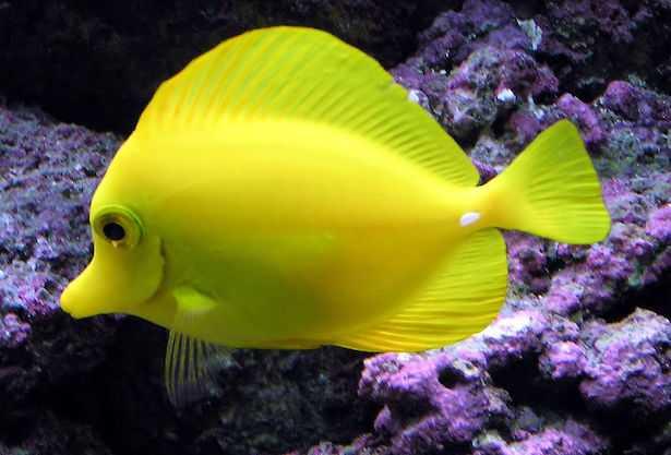 pesci per acquario marino