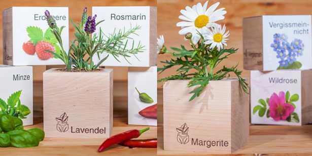 piante in cassetta