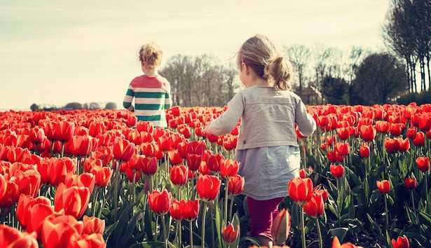 tulipani in giardino