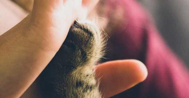 Gatti E Neonati Malattie E Allergie Idee Green
