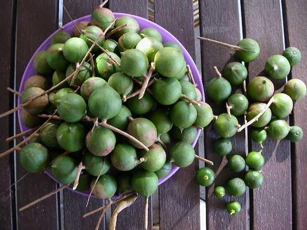 noce di macadamia