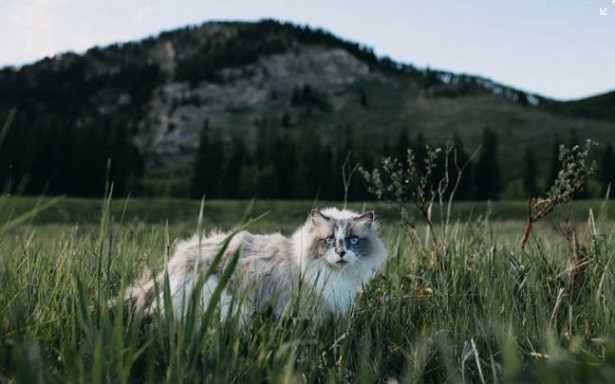 Recinzione Giardino Per Gatti.Recinto Per Gatti Da Giardino Idee Green