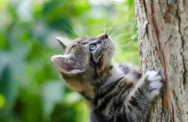 Recinto per gatti da giardino idee green - Recinti per giardini ...