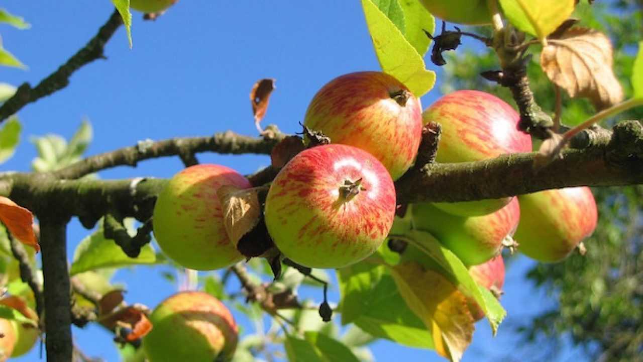 Foto Di Alberi Da Frutto come piantare un albero da frutto - idee green