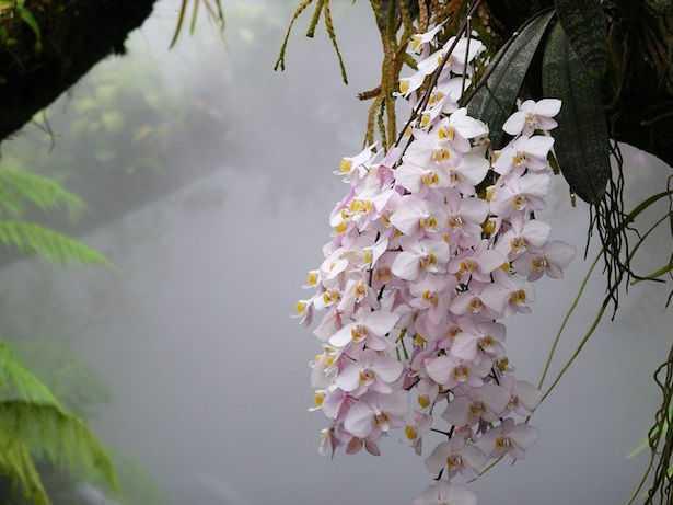 Orchidee profumate