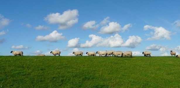 Cielo a pecorelle