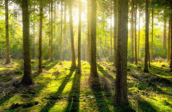 come proteggere l'ambiente