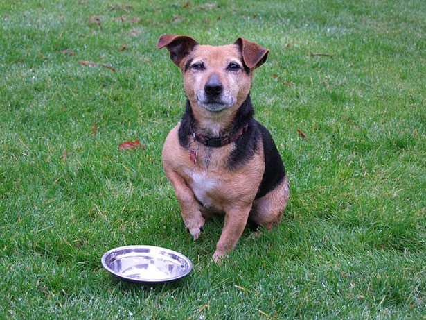 omeopatia e alimentazione cani
