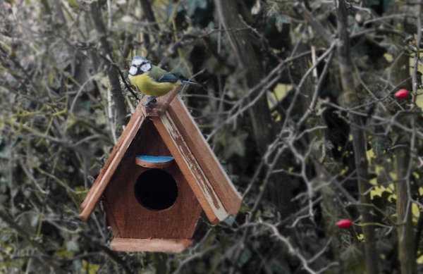 come fare casetta per uccelli fai da te