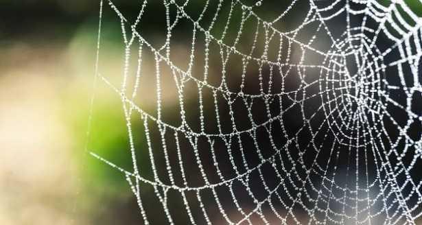 Seta di ragno