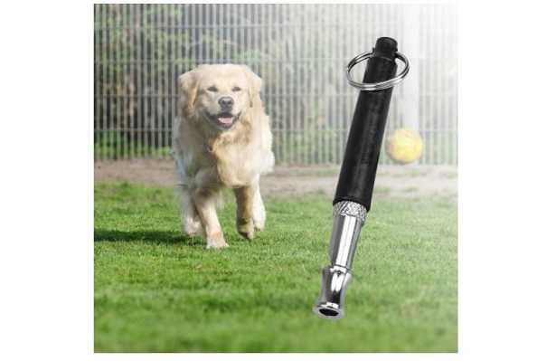 Udito nei cani