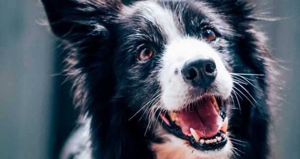 Ultrasuoni per cani