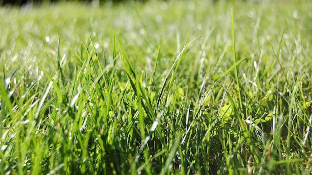 Concime Per Prato Autunnale come curare il prato in primavera - idee green