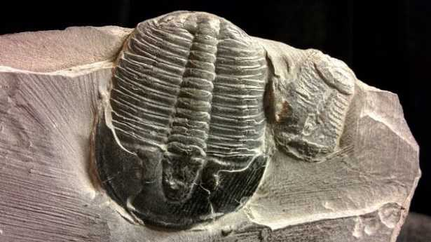 Trilobiti,