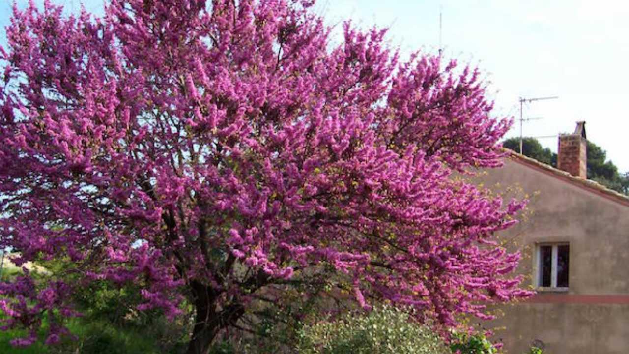 Piante Perenni Resistenti Al Freddo piante resistenti alla siccità - idee green